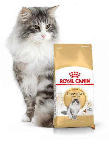 Корм royal canin norwegian forest cat