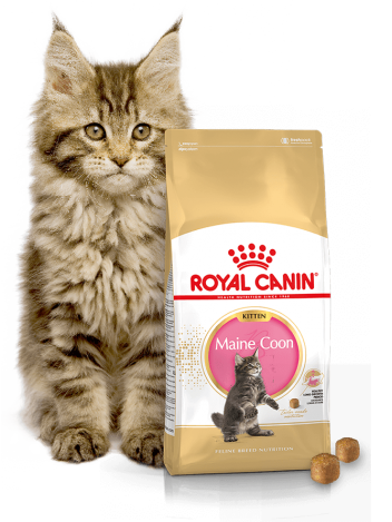 ROYAL CANIN KITTEN MAINE COON - 800G (400Gx2)