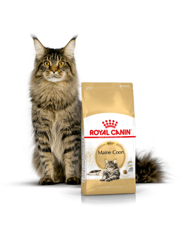 ROYAL CANIN MAINE COON 31 - 400G + 400G