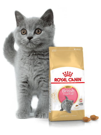 ROYAL CANIN KITTEN BRITISH SHORTHAIR - 400G + 400G