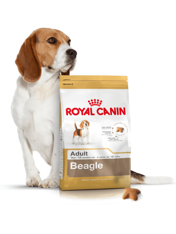 ROYAL CANIN BEAGLE - 24KG (12KGx2)